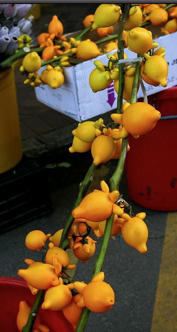 080112e-Flower_St-023s
