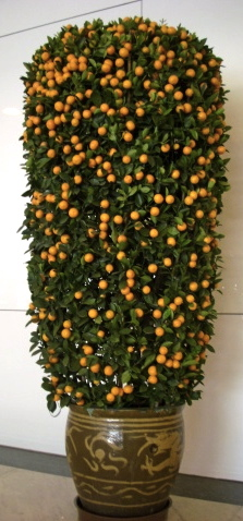a 1.5 m tangerine tree cost around HK$2000 / US$250
