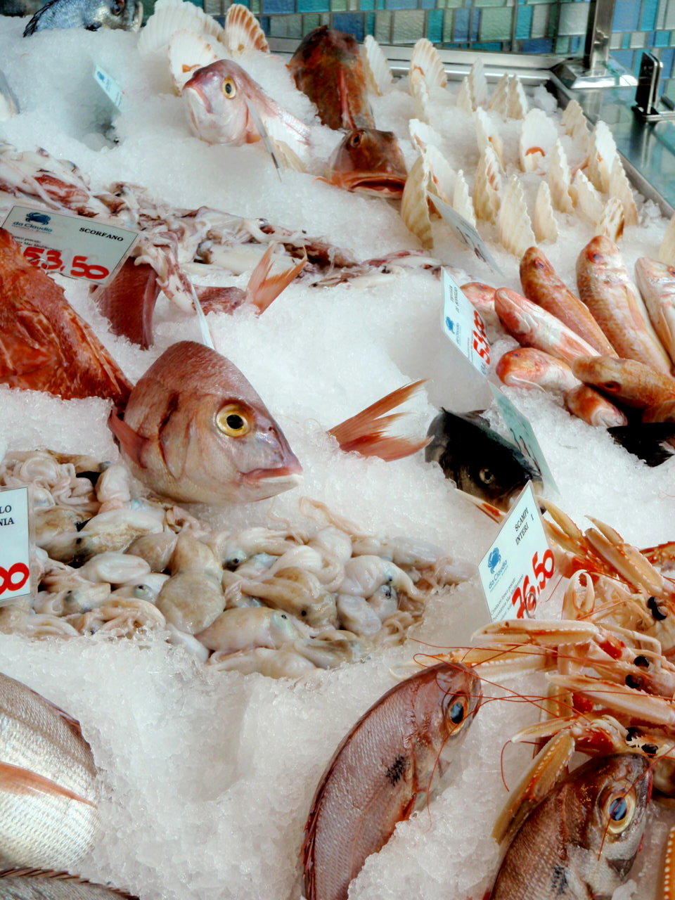 display of fresh seafood
