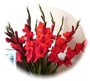 Gladiolus symbolize advancement